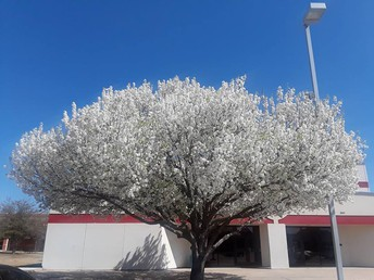 Signs of Spring at MMS