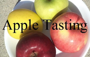Apple Sampling at LAF - October 11