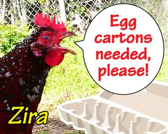 Wanted: Empty Egg Cartons