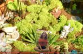 Diorama/Fairy Garden for Background