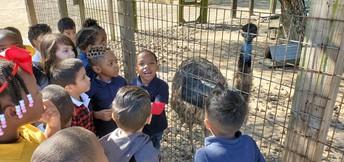 Kindergartners have fun at the zoo!