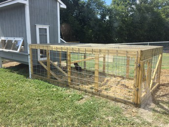 More chickens arriving soon but these two love the new coop.