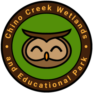 Chino Creek Wetlands Educational Tour