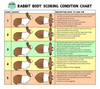 Rabbit Body Score