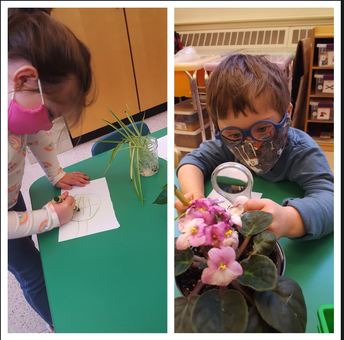 FHG PreK students studying plants