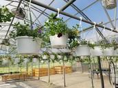 Plant Sale Continues!