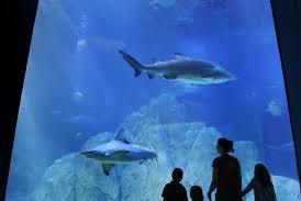 Adventure Aquarium- Camden, NJ