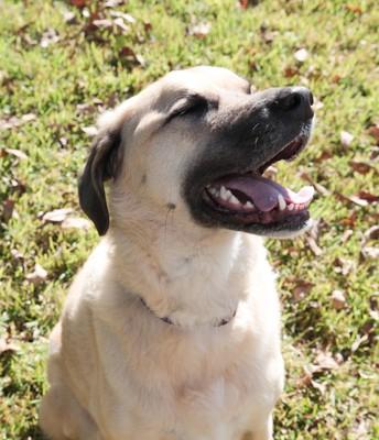Morgan Gibb's dog, Kylie, happy at Thanksgiving!