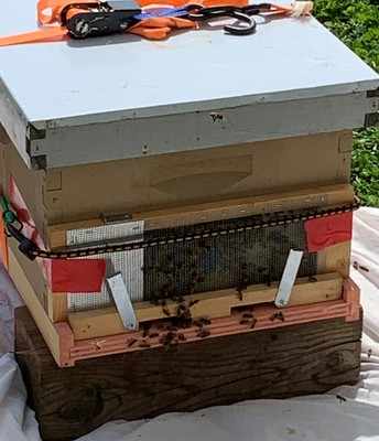 A New Home For the Bees