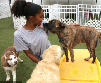 Unleashed on East/Kozy Kennels is looking for a Doggy Day Care Technician!