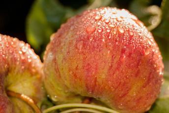 Sage's Apples