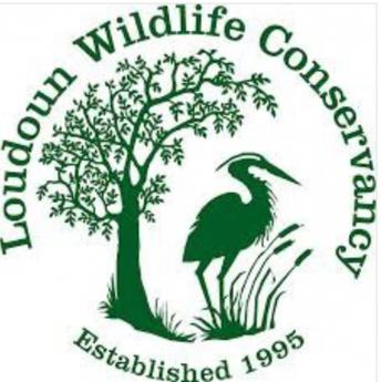 Fund Spotlight: Loudoun Wildlife Conservancy Endowment Fund