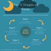 What are the stages of falling asleep?