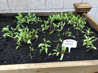 Boy Scout member Builds Gardening Planters at Central Middle School