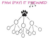 Pay It Forward Project