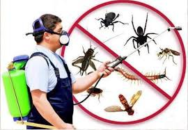 Pest Control Are Here To Help You Out