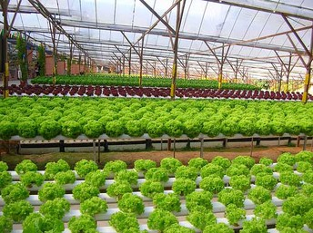 Five Reasons Why You Shouldn't Rely On Indoor Hydroponic Garden Anymore