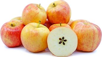 January Fresh Fruit Program