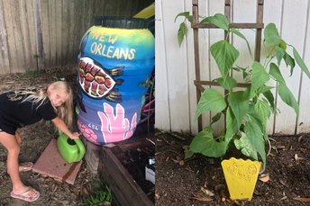 Caring for her red bean plant