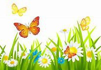 Help Us Bring Colorful Butterflies to School Before the Color Run