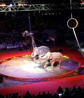 Circus Trip