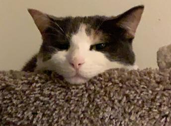 Sra. Hernandez' cat, KitKat!