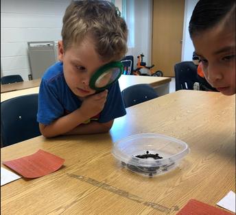 Exploring Earthworms