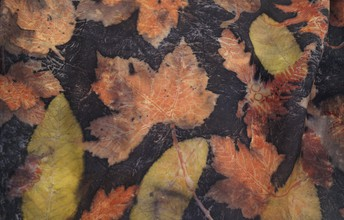 botanical prints meet acid dyes
