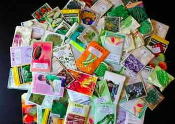 Vegetable seeds or flower seeds