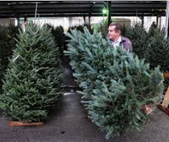 STOP — LOOK HERE FIRST FOR YOUR CHRISTMAS TREE