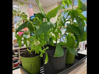 Student Council Plant Sale