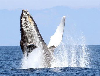 Whale Watching Meet-Up
