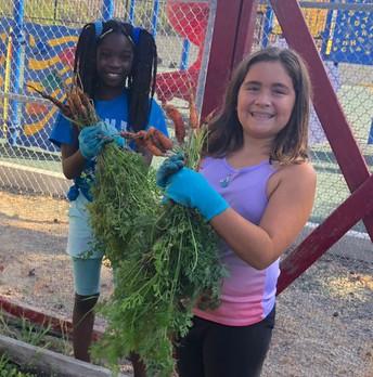 Harvest Time at CVES