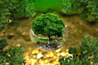 Environmental Action Team News