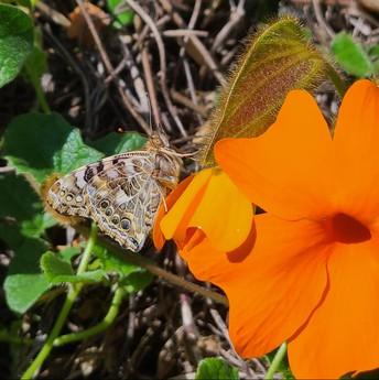 Our Butterflies