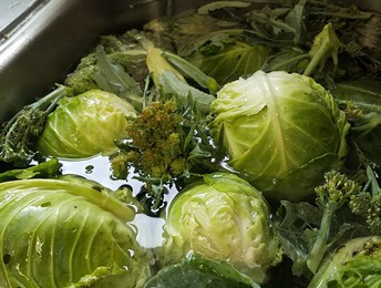 Cabbage & Broccoli Today!