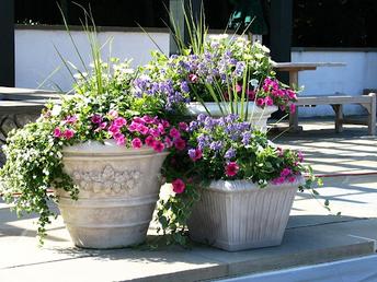 Plant & Seed Sale