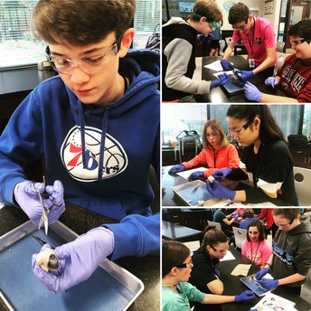 8TH GRADE SCIENCE ~ SHEEP EYEBALL DISSECTION