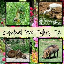 3rd grade field trip to the Tyler Zoo - April 12th
