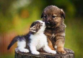 The Warriors Against Animal Cruelty Club
