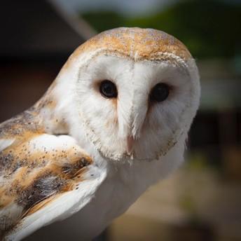 Doing owl pellets and need a bone id chart.....