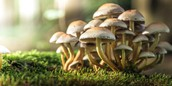 Research Shows Magic Mushrooms Can Offer Real Benefits in Depression Therapy
