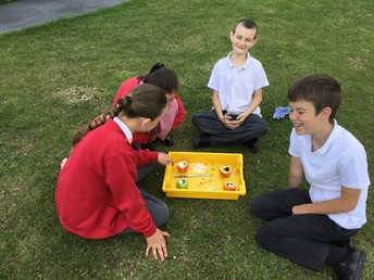 Science in Year 5