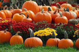 OCTOBER ACTIVITIES