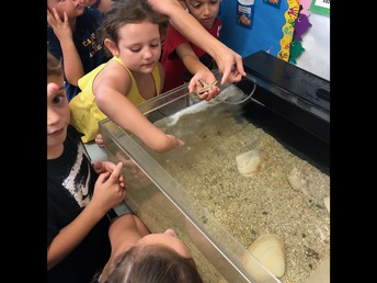 Gr. 2 Learning about the Sea Creatures in their Touch Tank