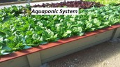 Some Helpful Guidance On Practical Secrets For Aquaponics System