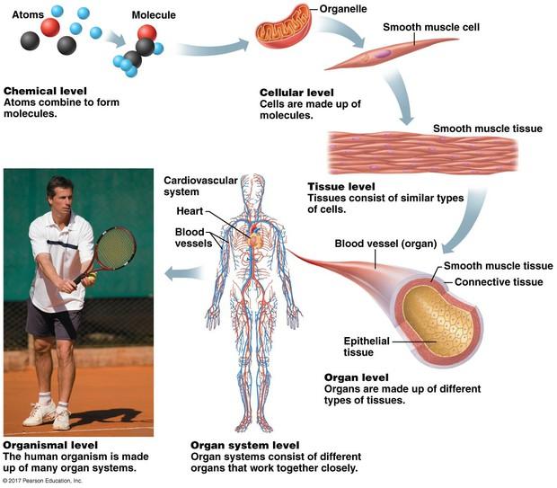 Human Body & Orientation