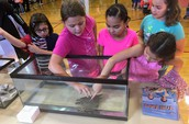 3rd Grade Attends Science Expo
