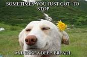 Take Deep Breath