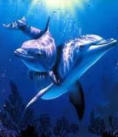 + Contacto con delfines